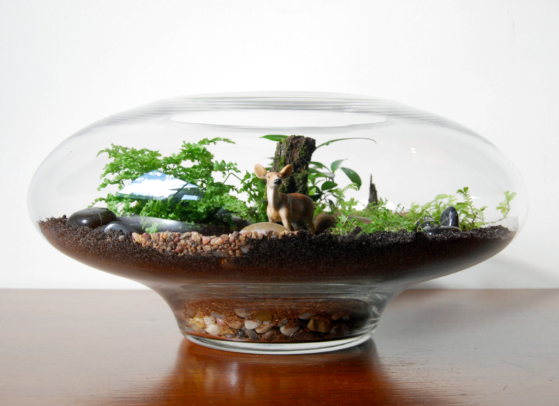 #TEMpting: Terrarium Business to BUY…